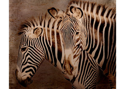 zebror1kathhilm