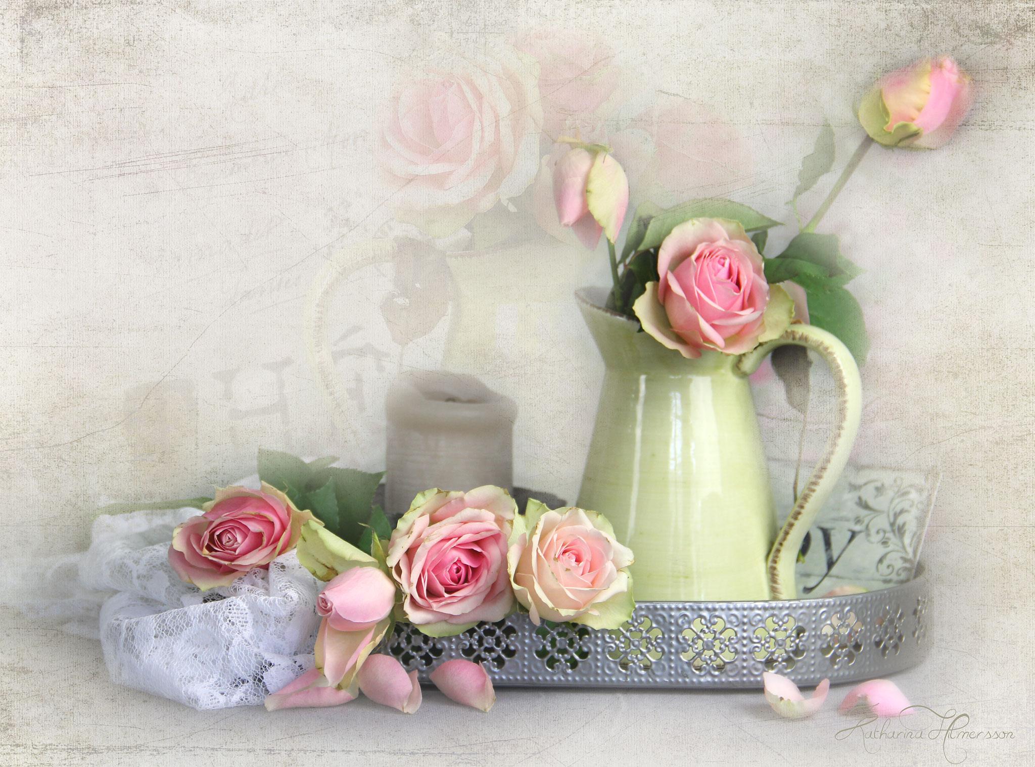 cangreenroses2