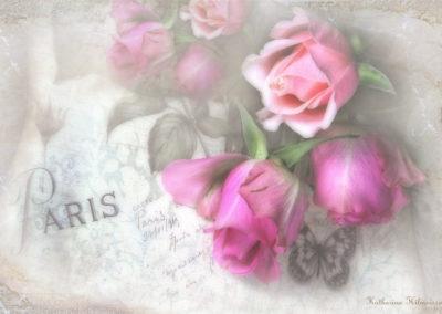 rosesparis1kh